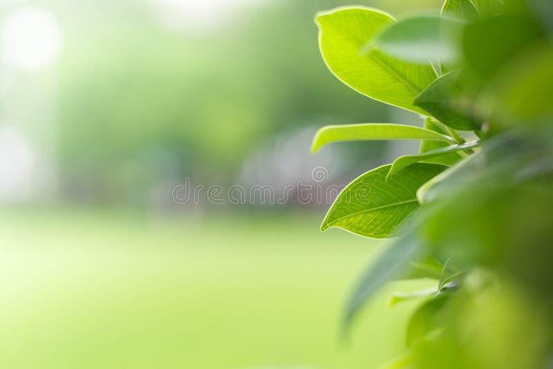 Grüne Natur mit Kopienraum stockfoto