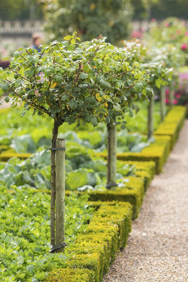 Grüne Obstbäume in einem französischen Gemüsegarten in Chateau de Villandry, Loire Valley lizenzfreie stockfotos