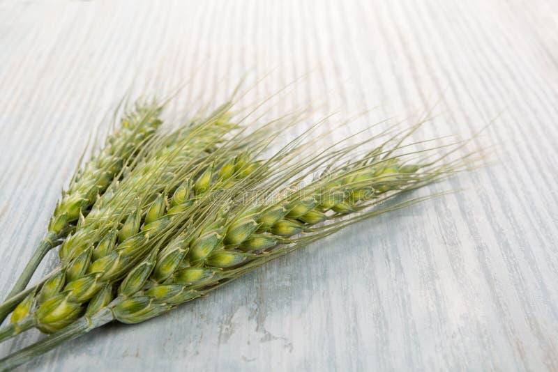 Grüne Ohren des Weizens lizenzfreies stockfoto