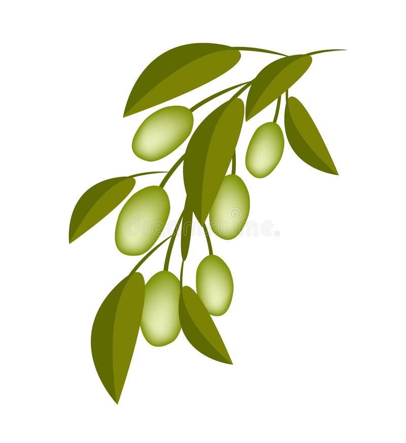 Grüne Oliven auf einer Niederlassung auf weißem Hintergrund lizenzfreie abbildung