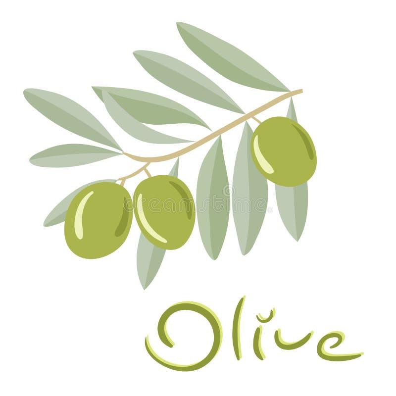 Grüne Oliven auf einer Niederlassung mit Blättern vektor abbildung