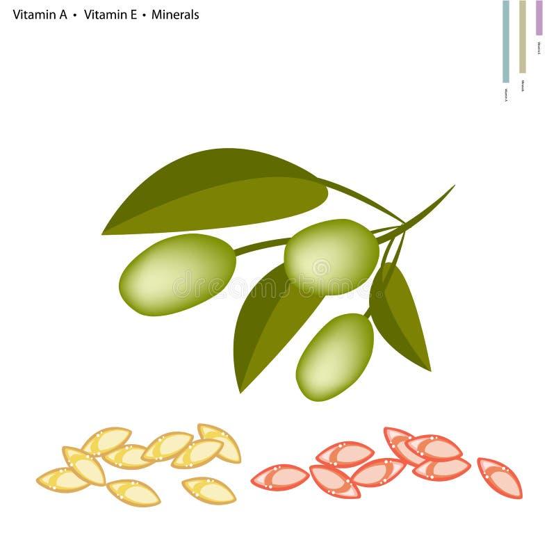 Grüne Oliven mit Vitamin A, E und Mineralien stock abbildung