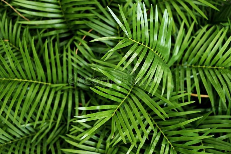 Grüne Palmblätter im Hintergrundmuster im Wald lizenzfreie stockbilder