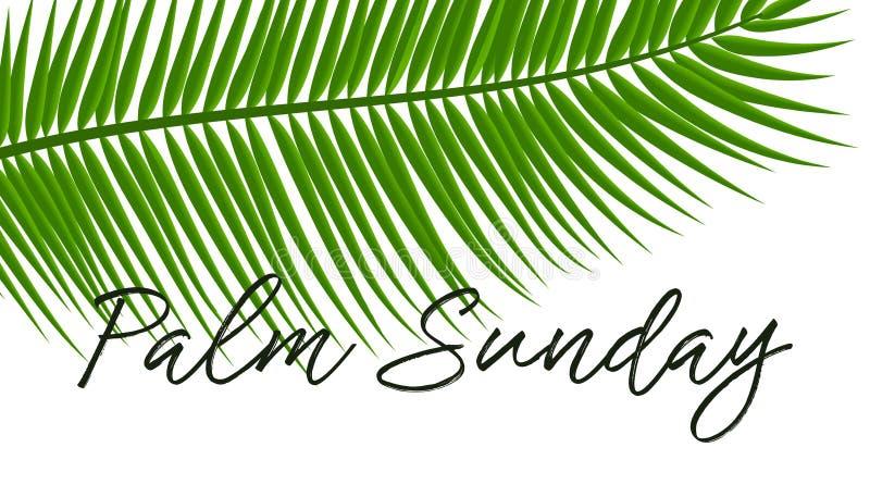 Grüne Palmblattikone Vector Illustration für christliche Feiertag Palmsonntag stock abbildung