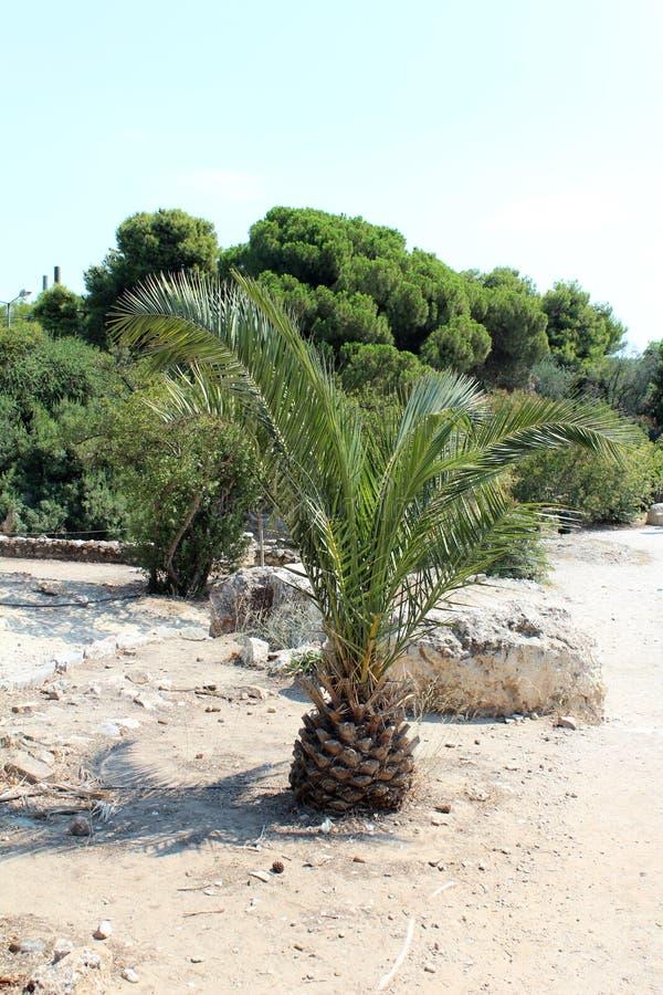 Grüne Palme stockfotografie
