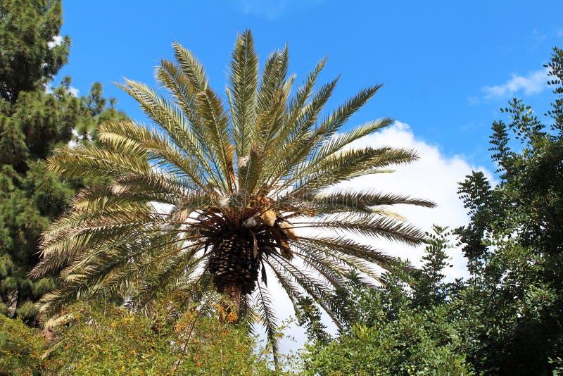 Grüne Palme lizenzfreie stockbilder