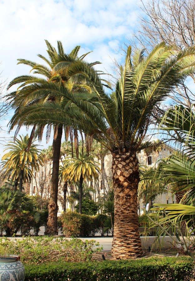 Grüne Palme stockbilder