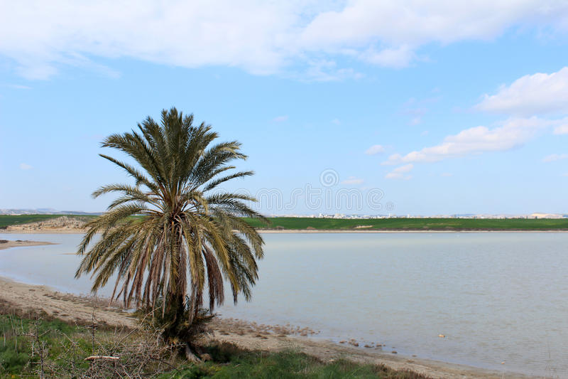 Grüne Palme stockfoto