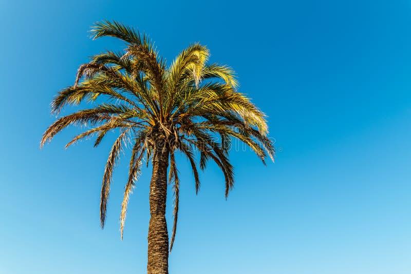 Grüne Palme auf blauem Himmel stockbild
