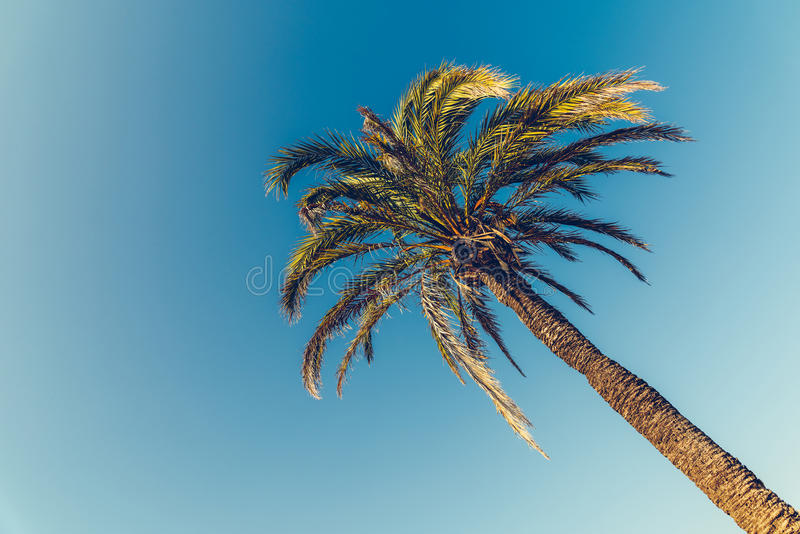 Grüne Palme auf blauem Himmel lizenzfreie stockbilder