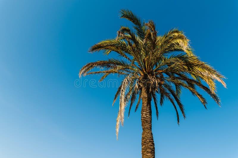 Grüne Palme auf blauem Himmel stockbilder