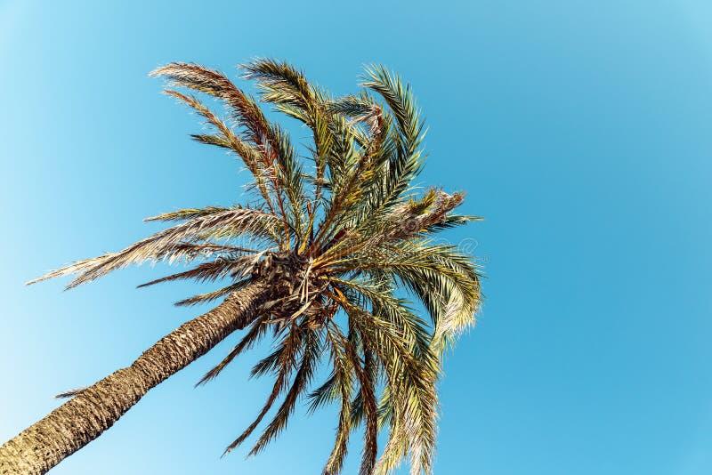 Grüne Palme auf blauem Himmel lizenzfreie stockfotos