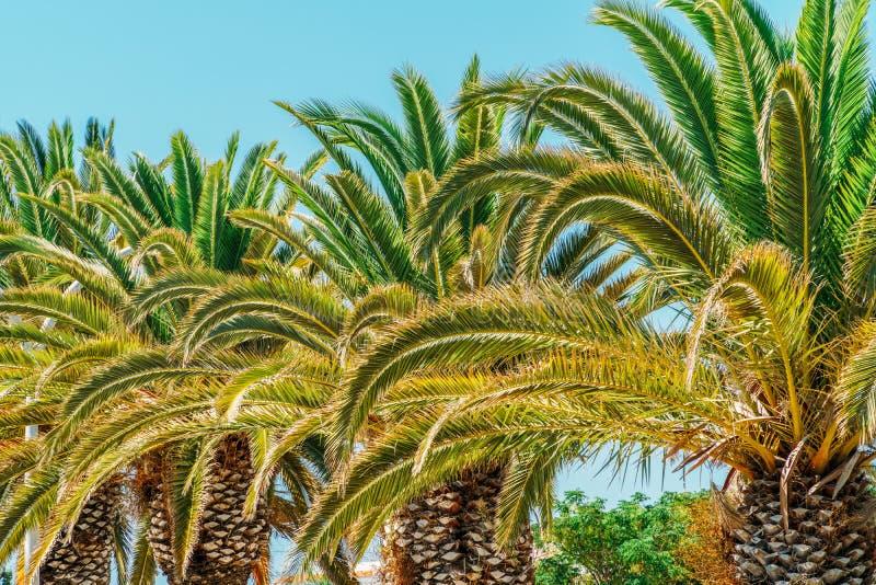 Grüne Palme-Blätter auf Himmel stockfotografie