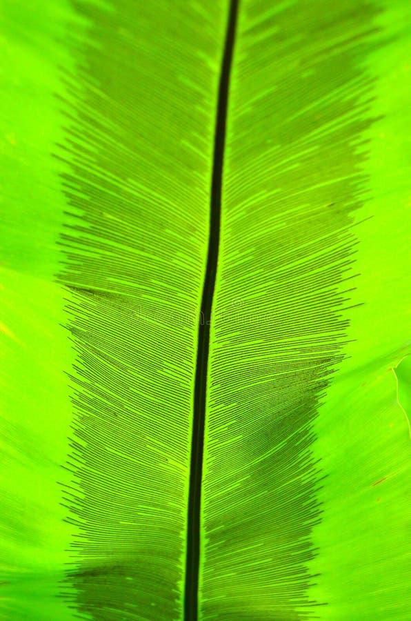 Grüne Palme-Farbbeschaffenheit stockfotos