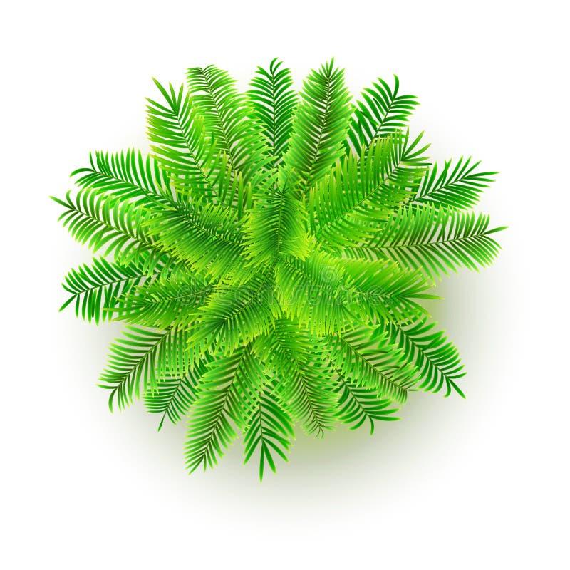 Grüne Palme, Illustration des Vektors 3D lokalisiert auf weißem Hintergrund Draufsicht über Niederlassungen des Kokosnussbaums Ds lizenzfreie abbildung