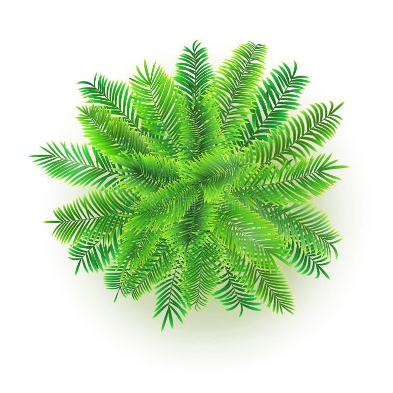 Grüne Palme, Illustration des Vektors 3D lokalisiert auf weißem Hintergrund Draufsicht über Niederlassungen des Kokosnussbaums lizenzfreie abbildung