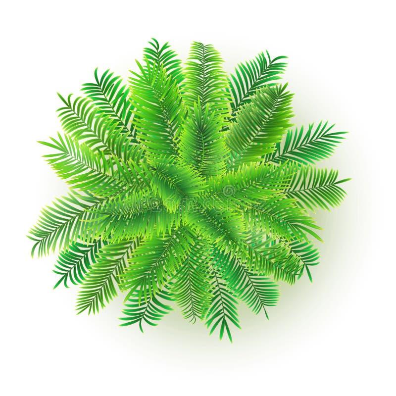 Grüne Palme, Illustration des Vektors 3D lokalisiert auf weißem Hintergrund Exotischer Baum vom Dschungel für Ihre Projektplanung stock abbildung