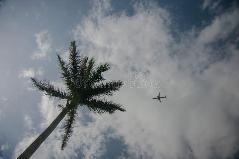 Grüne Palme und kleine Fläche auf dem blauen Himmel mit Wolken lizenzfreie stockbilder