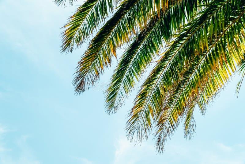Grüne Palmeblätter lizenzfreie stockbilder
