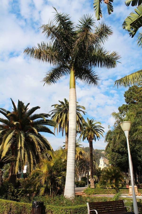 Grüne Palmen stockbilder