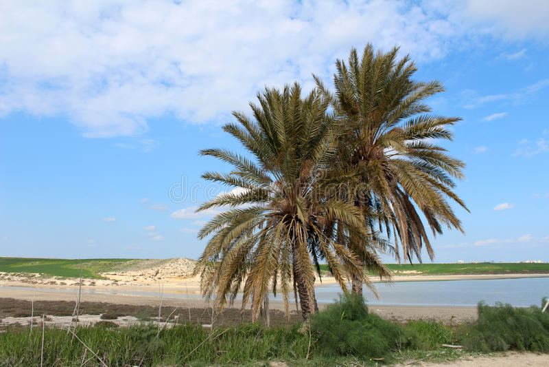 Grüne Palmen lizenzfreies stockbild