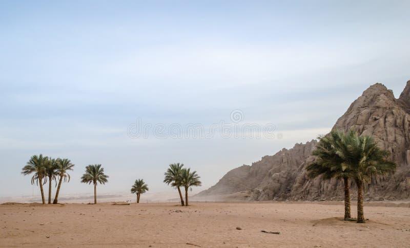 Grüne Palmen auf dem Hintergrund der Wüste von Ägypten und von Th lizenzfreie stockbilder