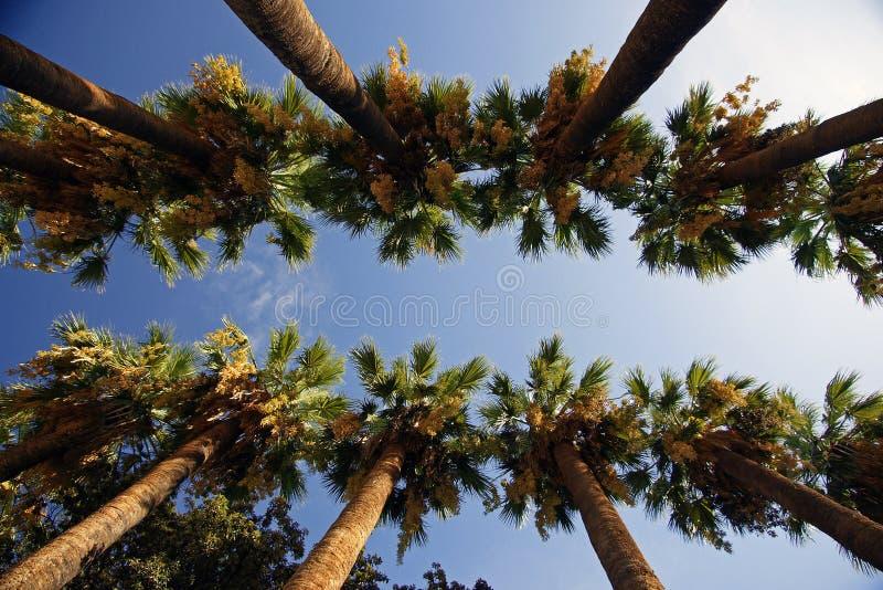 Grüne Palmen auf Zakynthos-Insel in Griechenland stockbilder