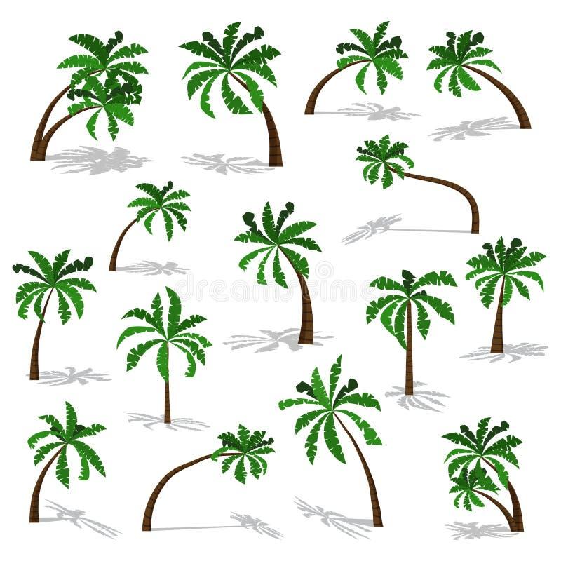 Grüne Palmen eingestellt mit dem Schatten lokalisiert auf weißem Hintergrund lizenzfreie abbildung