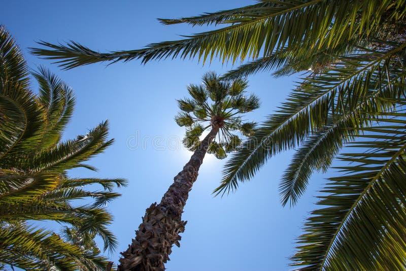 Grüne Palmen unter einem blauen tropischen Himmel lizenzfreie stockfotografie