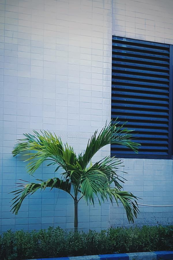Grüne Palmennatur stockfoto