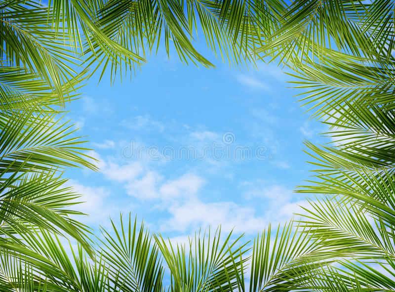 Grüne Palmenniederlassungen und blauer Himmel stockbilder