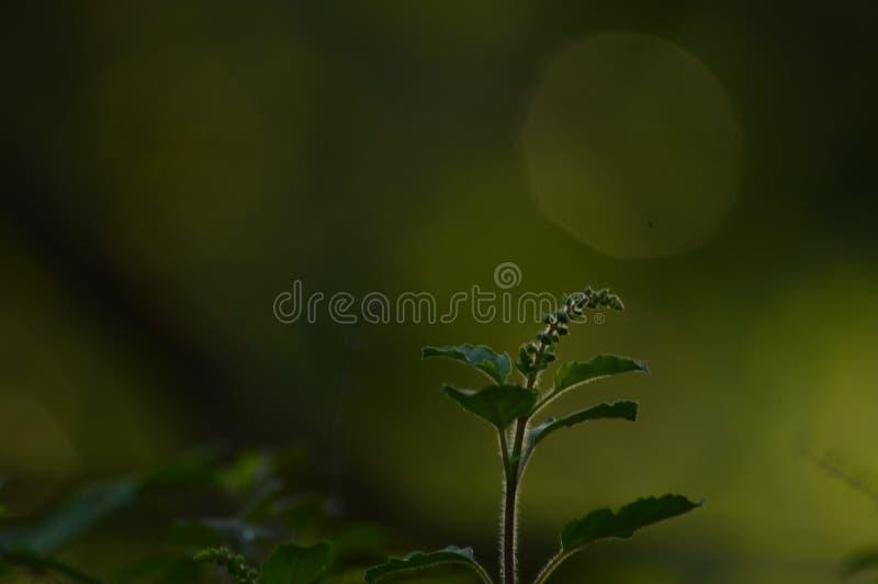 Grüne Pflanze und Bokaeffekt stockfotografie