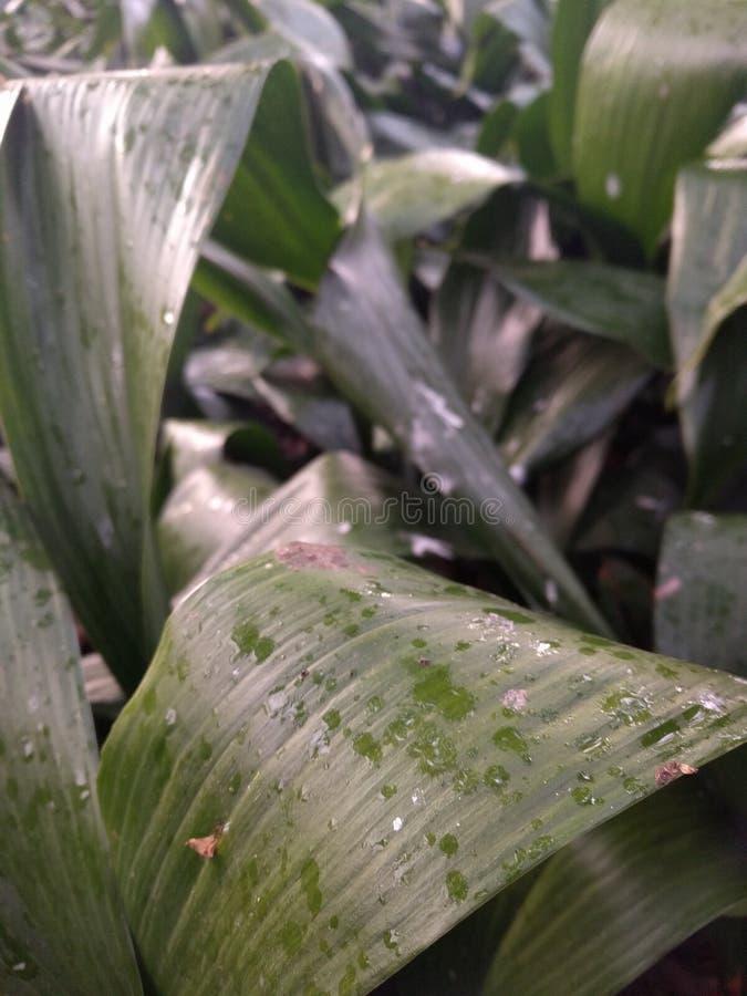 Grüne Pflanzenblätter stockbilder