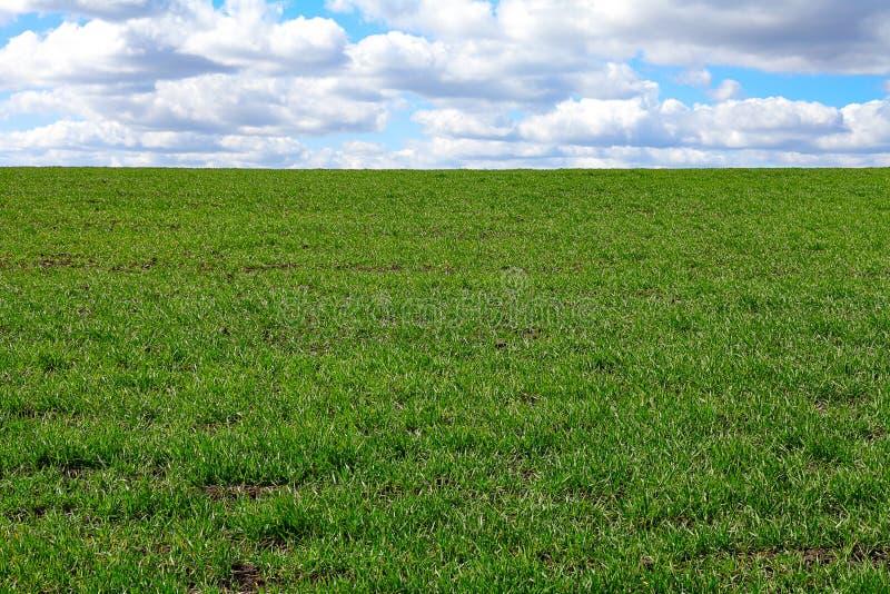 Grüne Rasenfläche stockbild