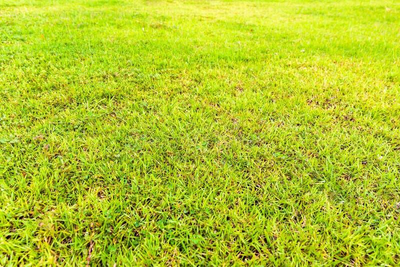 Grüne Rasenfläche in einem Park konnte Besuchern neues Gefühl geben stockfoto