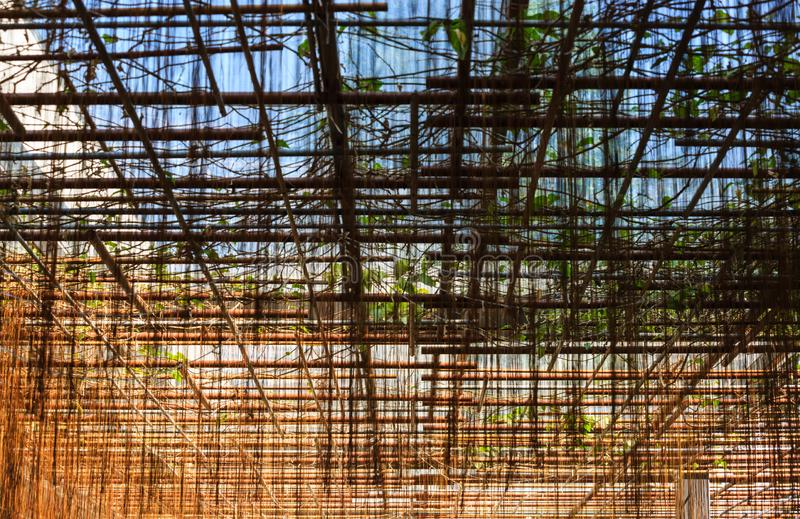 Grüne Rattanbetriebslandschaftsschutznahaufnahme-Detailansicht lizenzfreie stockfotografie