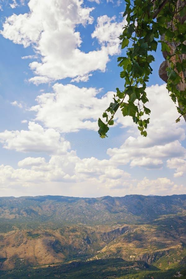 Grüne Rebe gegen blauen Himmel mit weißen Wolken Tiefer blauer Himmel, Krim, Ukraine montenegro lizenzfreie stockfotos