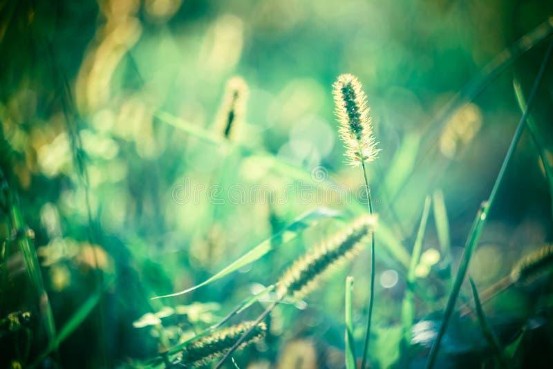 Grüne Sommer-Gras-Wiesen-Nahaufnahme mit hellem lizenzfreie stockbilder