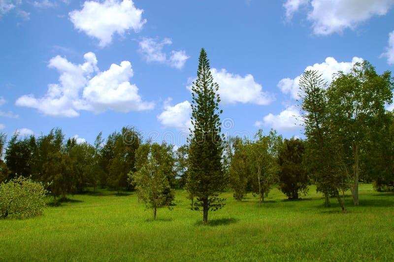 Grüne Sommerbaumlandschaft lizenzfreie stockfotos