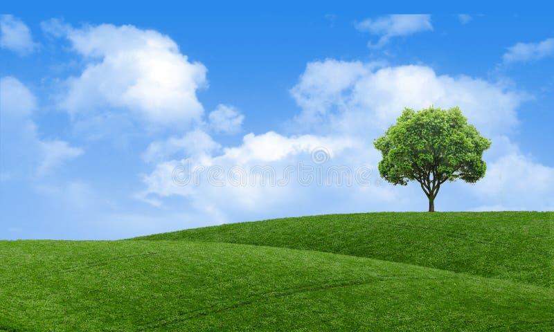 Grüne Sommerlandschaftsszenische Ansichttapete Alleiner Baum auf grasartigem Hügel und blauem Himmel mit Wolken Einsames Baumfrüh stockfotos