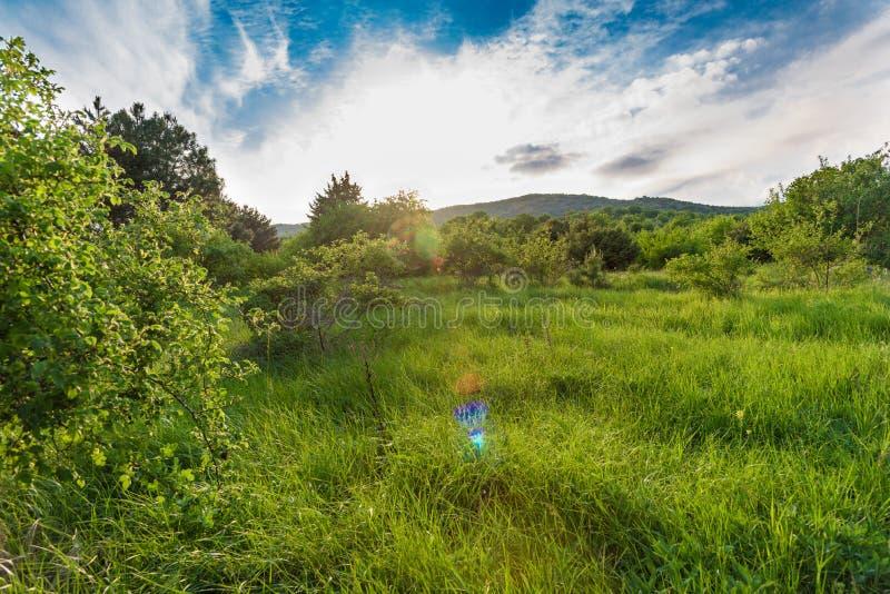 Grüne sonnige Dämmerung in einer Weidelandschaft stockfotos