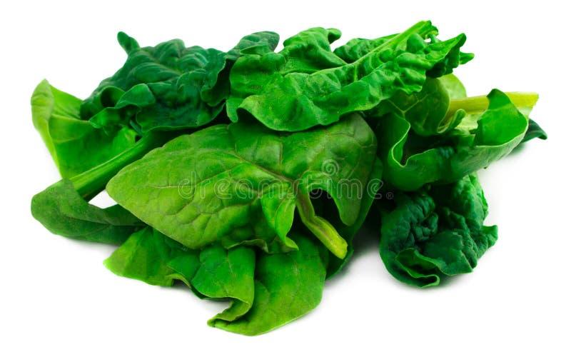 Grüne Spinatsblätter auf lokalisiertem weißem Hintergrund lizenzfreie stockfotografie