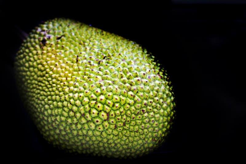 Grüne Steckfassungsfruchthaut in der Dunkelheit lizenzfreie stockfotografie
