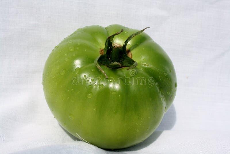 Grüne Tomate stockfoto