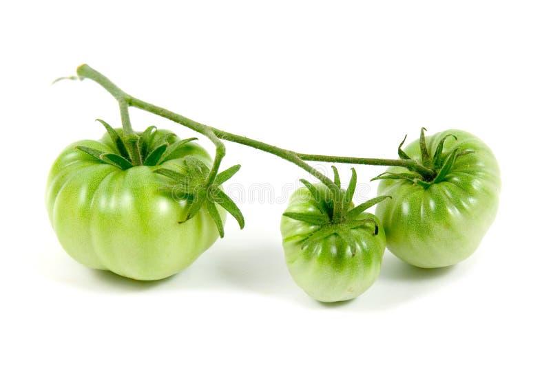 Download Grüne Tomaten stockbild. Bild von getrennt, hintergrund - 9099225