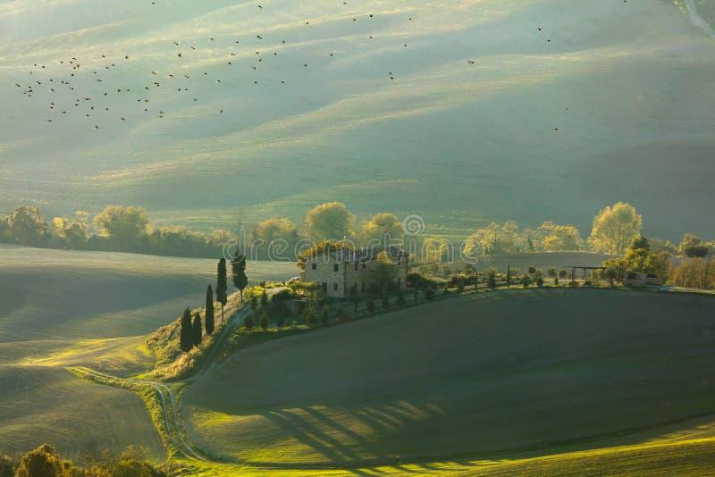 Grüne Toskana-Landschaft zur Morgenzeit mit Vögeln lizenzfreie stockfotografie