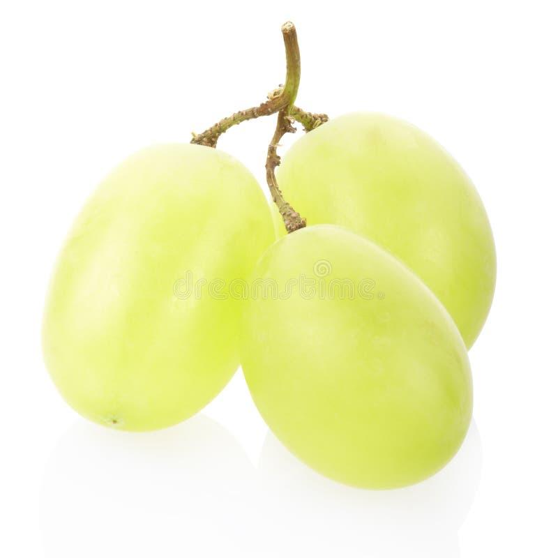 Grüne Traubenfrucht stockbilder