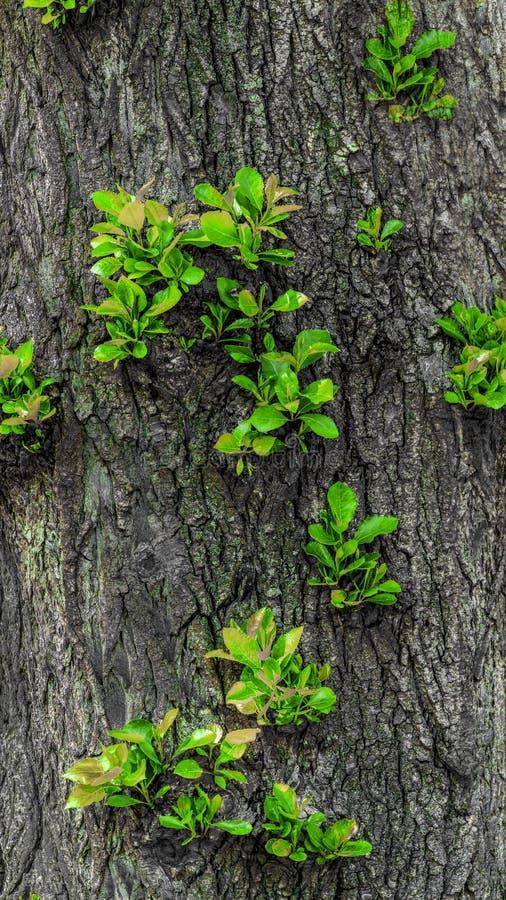 Gr?ne Trieb wachsen auf einem Baum stockfoto