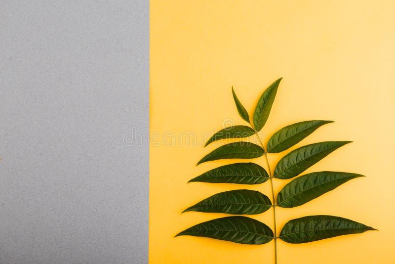 Grüne tropische Blätter auf einem gelb-grauen Hintergrund Minimales Artdesign mit Anlagen entziehen Sie Hintergrund stockbild