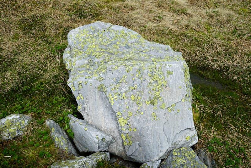 Grüne und gelbe Flechte auf Stein stockfoto